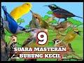 Jenis Burung Kecil Masteran Terbaik  Mp3 - Mp4 Download
