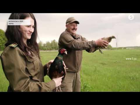 200 фазанів випустили