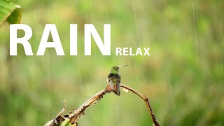 RAIN MEDITATION. Rain sounds for background and relaxation