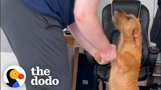 Dog Returned 2 Days After Being Adopted | The Dodo Foster Diaries