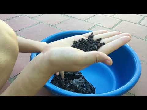 Mẹo Hay Khi Tạo Hoa Văn Chữ T bằng Hạt Đỗ Trong Chậu Nhựa