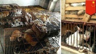 中国・江蘇省丹陽市の警察は、500匹以上のネコを盗んだとして男を逮捕し...