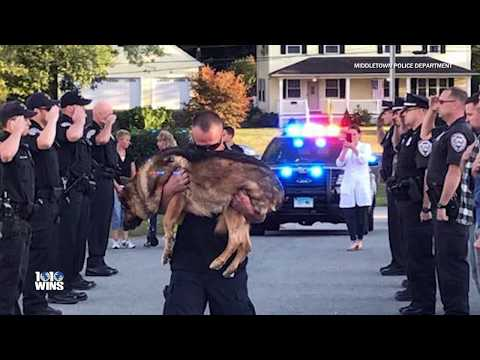 Dying K9 Officer With Liver Cancer Gets Final Salute By Police Department