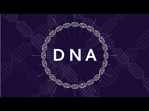 What Is DNA And How Does It Work? - Basics Of DNA