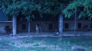 Питомцы приюта для собак.Донецк.2016