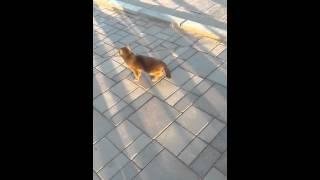 прикол кошка двигает хвостом