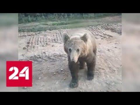 Смотреть фото Медведь напал на машину собравшихся покормить его людей. Видео - Россия 24 новости Россия
