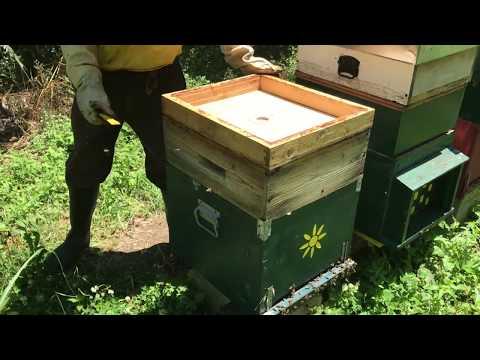 Raccogliamo il primo miele!