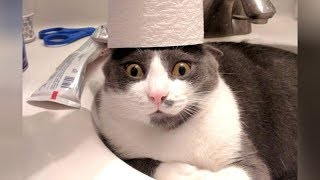 CRAZY CATS vs PAPER, get ready for SUPER LAUGHING! - Funny CAT VIDEOS