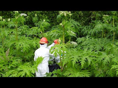 10 САМЫХ ОПАСНЫХ растений на планете!