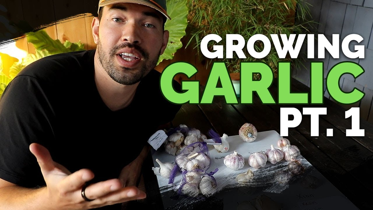 How to Grow Garlic (Part 1)   Varieties, Soil Prep, and Planting