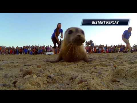 Sea Salt the Seal Returns to the Wild After Months in Rehab!