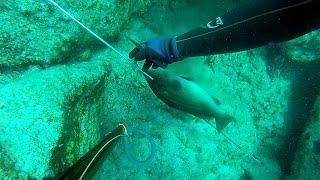 zıpkınla balık avı bahar, zıpkın avı, spearfishing, balık avı, ömer bırak