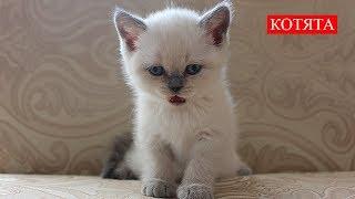 Котята | Человеческое тепло | Kittens