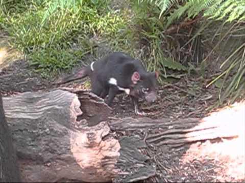 images ballarat wildlife - photo #41