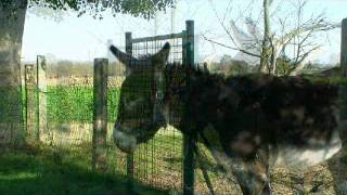 ânes-donkey