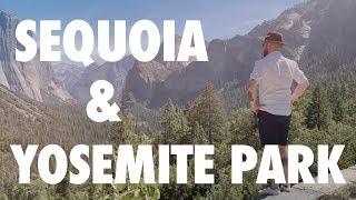 Zobacz największe drzewo na świecie!    Sequoia & Yosemite Park    Travel USA