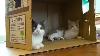 巨大なトイレの空き箱で作った猫カフェに可愛い店員が集まった🍀 294話