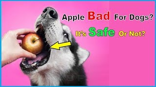 Can Dogs Eat Apples? Are Apples Safe for Dogs?
