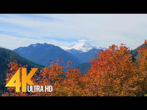 Autumn Colors in Washington State - 4K Nature Relax Autumn Video - 4 HRS
