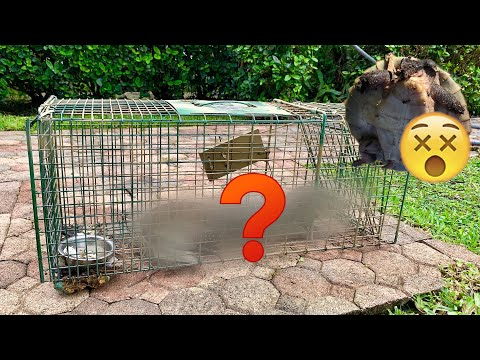WHAT ATE My TURTLES ?! WE TRAPPED THE KILLER !