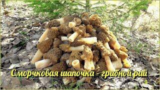 Сморчковая шапочка - грибной рай | Где искать Сморчки и Строчки? | Сбор весенних грибов 9 Мая 2018