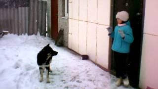 кусачая собака 5