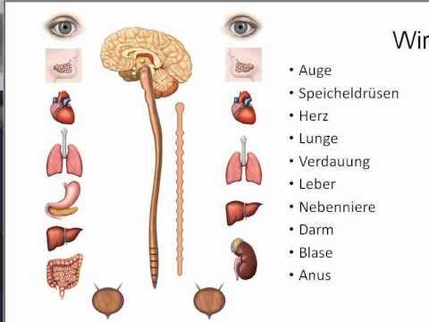 Autonomes Nervensystem - Ent- oder Anspannung - Parasympathikus ...