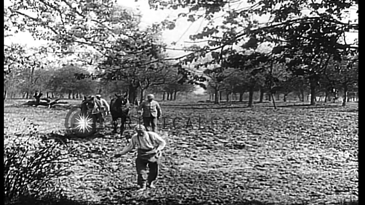 French soldiers in orchards of Flanders,Belgium in World War I. HD Stock Footage