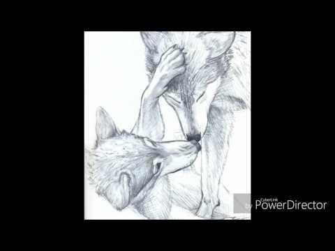 Anime Wolves - My Valentine