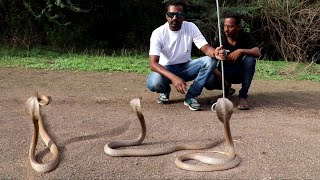 Snake release time and snake information | wildlife rescue society Ahmednagar thumbnail
