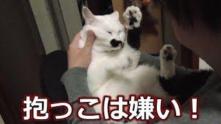 徐々に抱っこを嫌がり始める、猫フク姫