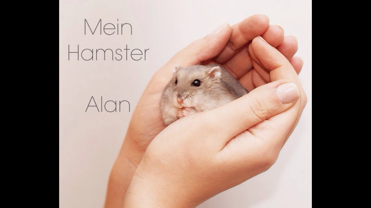 Babe gives x hamster germany