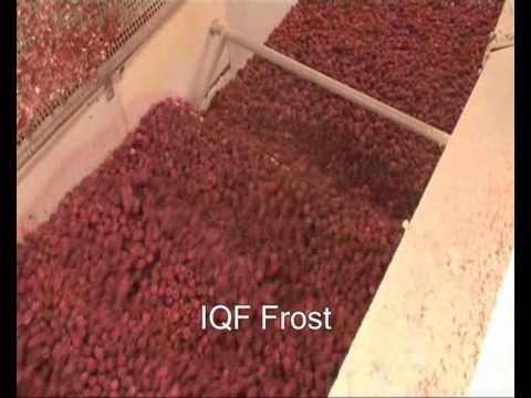 OctoFrost™ Frozen Berries: Raspberries - YouTube