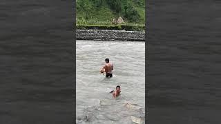 Dog swimming in riverJust amazing