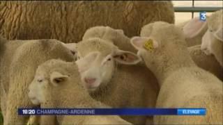 Fête du Mouton 2016 - France 3 - JT 2016