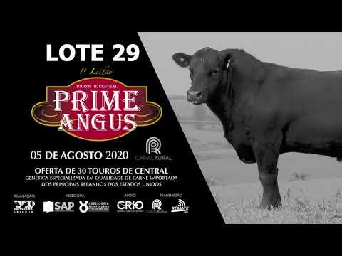 LOTE 29   BLACK OPAL TE936  MARBLE Prod  Agência El Campo