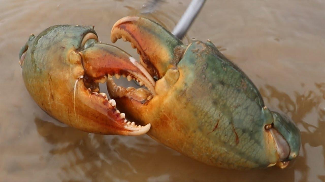 冒著大風浪趕海,發現遍地海螺,妹子撿到手軟,還意外抓到大螃蟹【海村小梅】