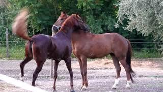 Horse Meeting 6
