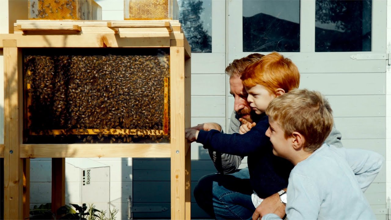 Learn More About B Box A Small Beehive For Any Environment