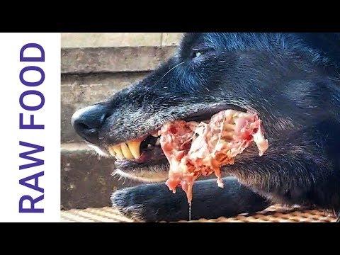 Feeding RAW Food to Dogs - Food Aggression Talk