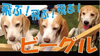 番組提供:ペットライン株式会社(http://www.petline.co.jp/) さて、...