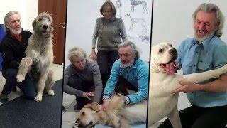 Профессиональный массаж животных от Михаила Ингермана