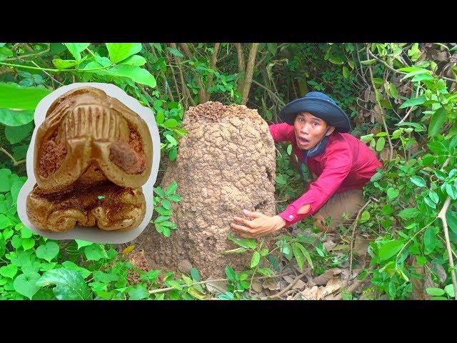 Đang đào tổ mối, vứt cuốc bỏ chạy vì tưởng tổ rắn nhưng quay lại biết mình sắp giàu to