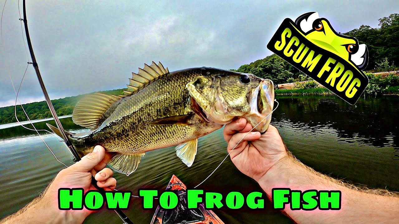 TIPS And TRICKS For FROG FISHING | How To Fish SCUM FROG