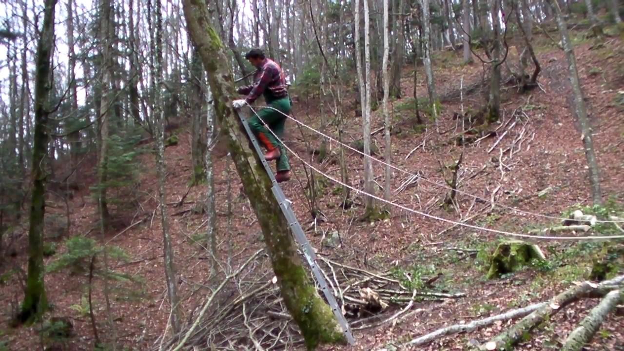 abattage arbre avec tire fort