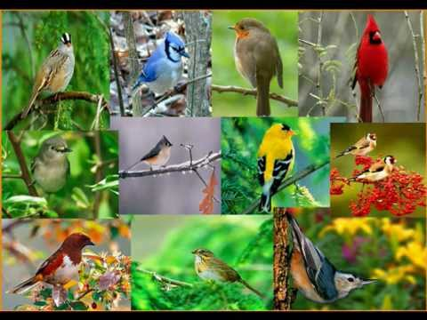 Singing birds nature s relaxing sounds youtube