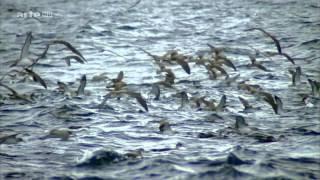 Leben am Limit  Reportage über das Leben am Limit - Geheimnisse der Tiefsee