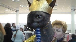 Величественный Сфинкс, Кошка Сфинкс, Породы кошек