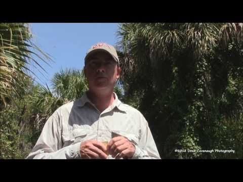 How to Catch Redfish, Trout and Black Drum: The Series